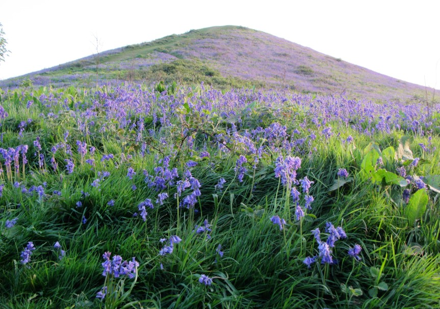 Bluebells on Cam Peak