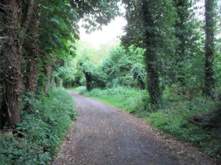 Path through Frampton Pools wood May 2017 - C Aistrop