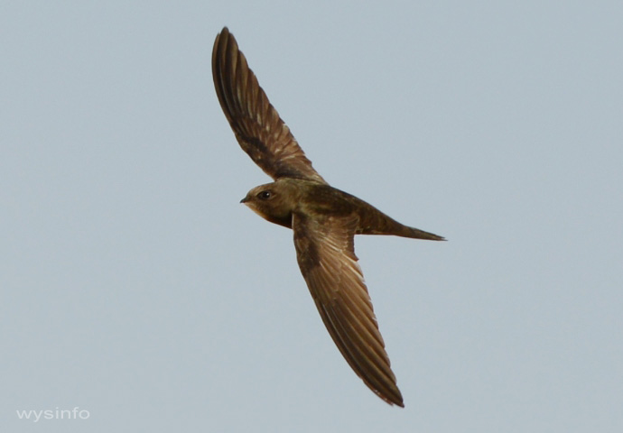Photo of swift 2