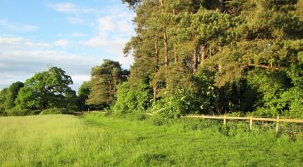 Wood by Frampton Pools May 2017 - Caroline Aistrop