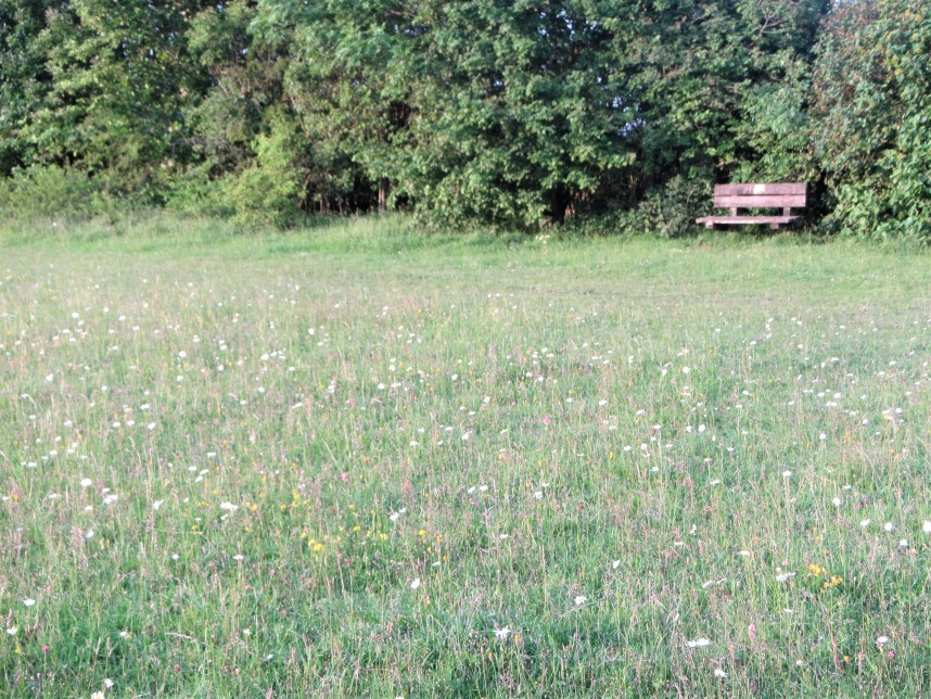 Meadow + bench Coaley Peak - C Aistrop
