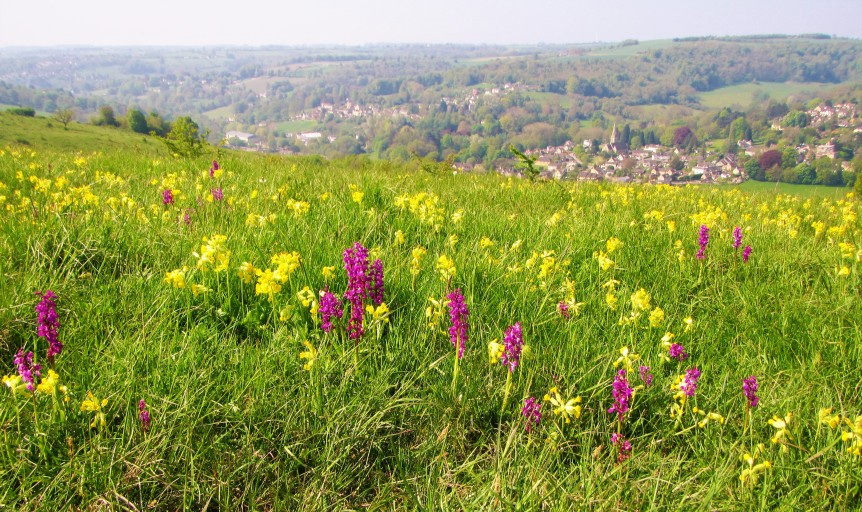 early purples + cowslips with view to Woodchester May 2018 C Aistrop